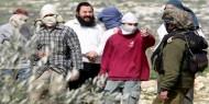 مستوطنون يسرقون ثمار الزيتون من بلدة قريوت جنوب نابلس