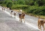 الكلاب الضالة تؤرق المواطنين ومطالبات بإيجاد حلول