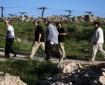 مستوطنون يقتلعون أكثر من 300 شجرة زيتون من بلدة تامزرعة الغربية