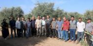 بالصور   تيار الإصلاح ينفذ مبادرة تطوعية لجني ثمار الزيتون في المحافظة الوسطى
